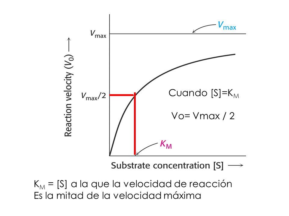 Cuando [S]=KM Vo= Vmax / 2. KM = [S] a la que la velocidad de reacción.